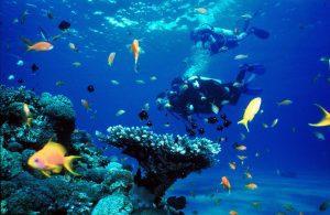 Scuba diving ne Malte