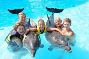 Shfaqja e Delfinit në Anglisht