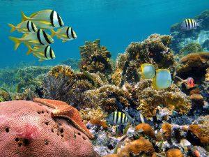 HP-Reef