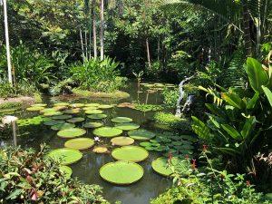 Kopshtet Botanike ne Singapor