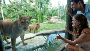 Kopshti Zoologik ne Bali