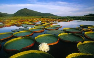 Pushime ne Pantanal Brazil