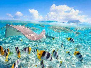 Tur ditor ne Bora Bora