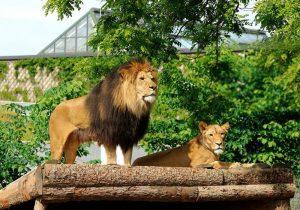Zoo ne Singapor